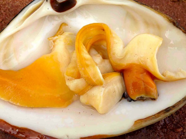 Clam meat in shell
