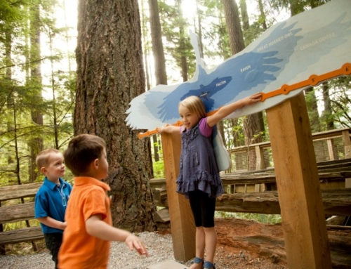 5 Of The Best Things To Do In Vancouver With kids