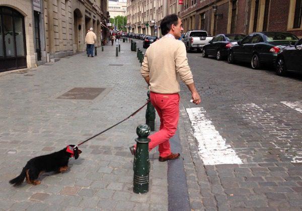 dashound going for a walk