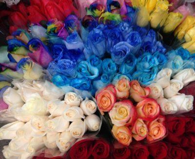 Equador roses