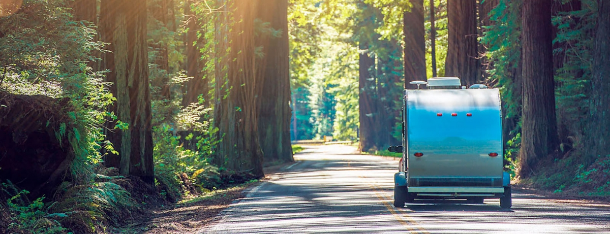 trailer driving through redwood forest