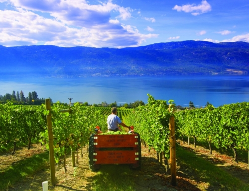 The best Okanagan Lake region wineries to visit