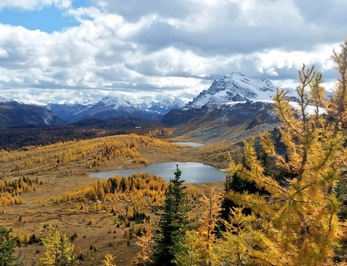 I just found the best larch hike in Banff National park
