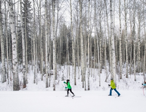 The Best Spots for Cross Country Skiing in Calgary